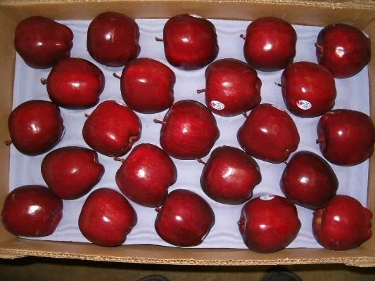 بسته بندی سیب صادراتی